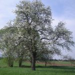 Frühling im Obstgarten