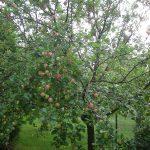 Sommer im Obstgarten